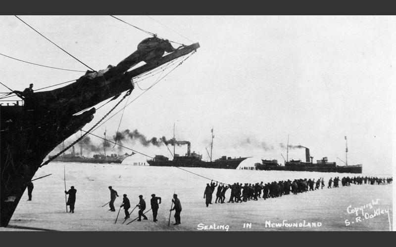 Sealers haul their ships through icy seas